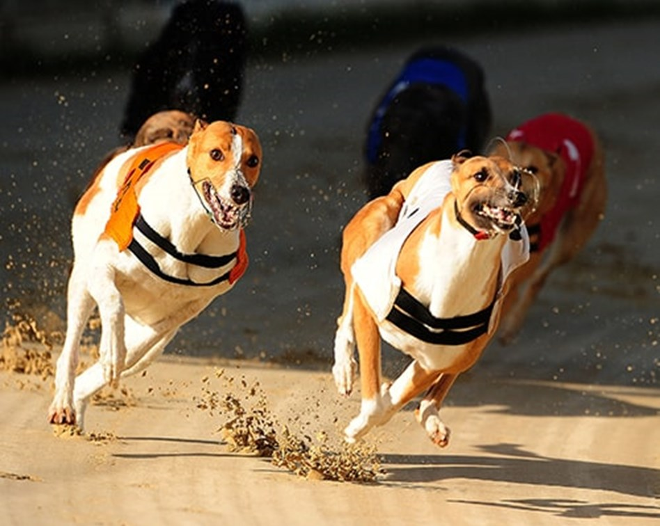 Financial spread betting training dogs indyref bettingadvice