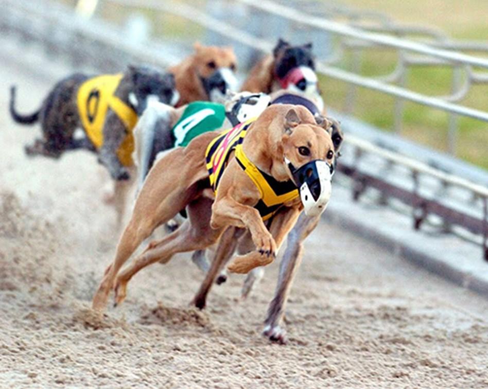 Financial spread betting training dogs bettington road oatlands