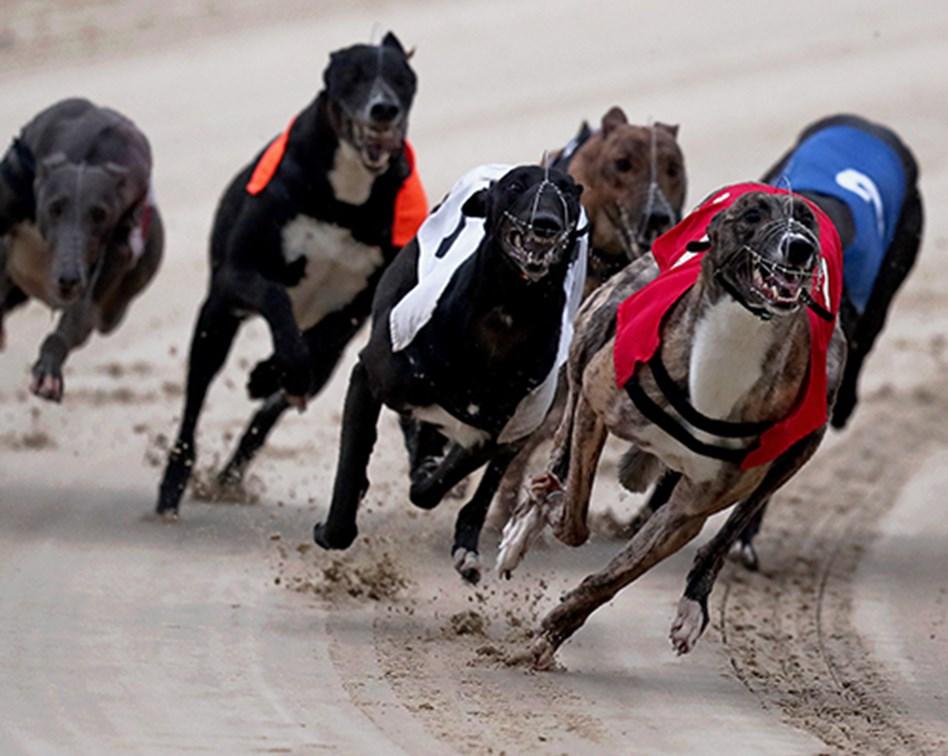 Financial spread betting training a puppy gekko spread betting reviews